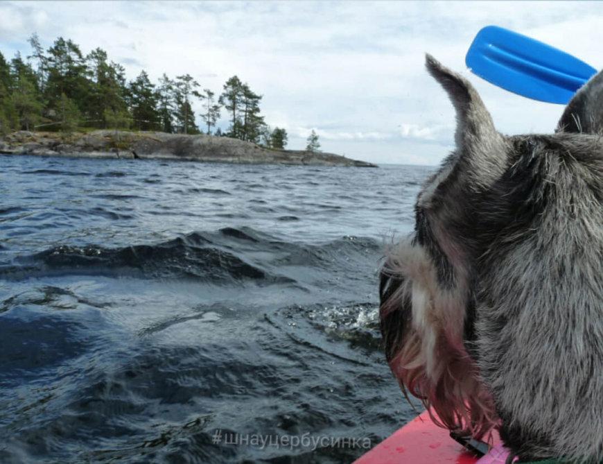С собакой на байдарке по Ладожским шхерам