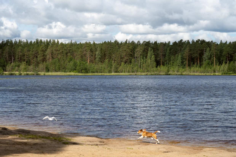 Заказник Щучье озеро в Ленинградской области