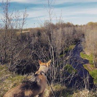 каньон реки Лавы на Васильково,  1 (Озёра и карьеры)