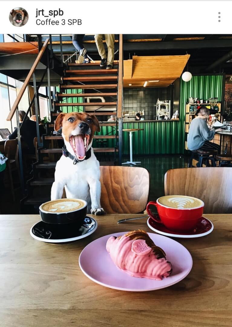 Собака в кафе