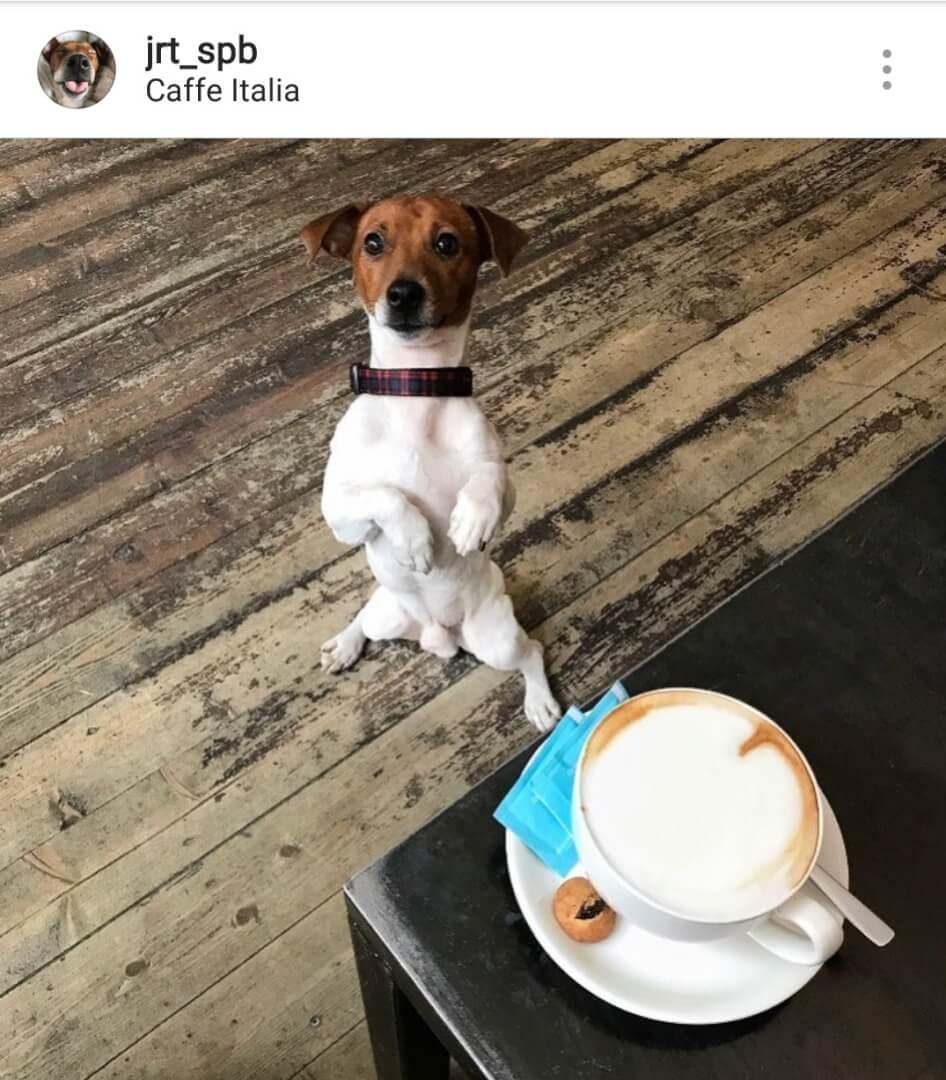 Италия на пр. Бакунина,  5 (Кафе)