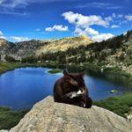 Кот-путешественник Бурма в Инстаграм
