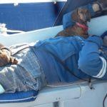 Собаки на яхте