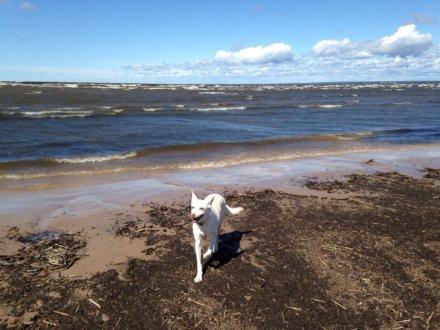 """Пляж """"Репино, Финский залив"""""""