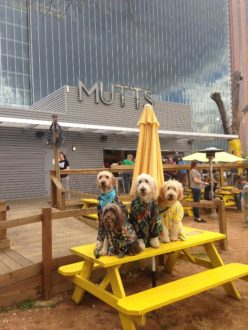 """Кафе """"Mutts Canine Cantina"""""""