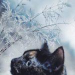 Кошка Кейт из Польши путешествует