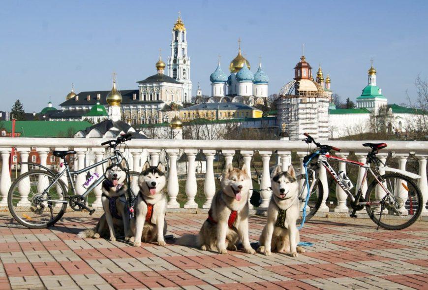 На велосипеде с собаками во Владимир