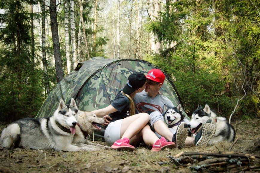 Лесной отдых с палаткой и собаками Хаски