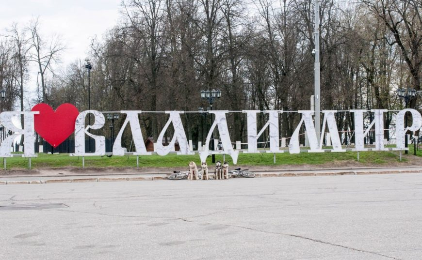 Собаки хаски во Владимире