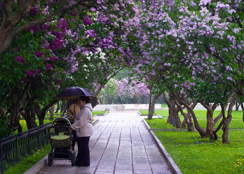 Сиреневый сад на Сиреневый сад,  Щёлковское ш. (Парки)