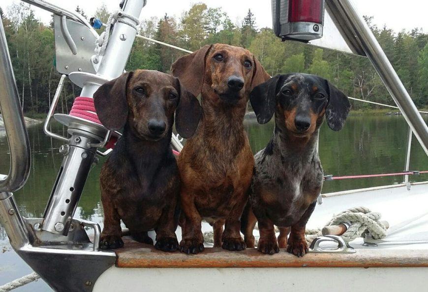 С собакой на яхте