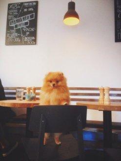 """Кафе """"Mitte"""""""