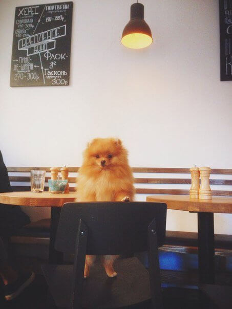 Mitte на ул. Рубинштейна,  27 (Кафе)