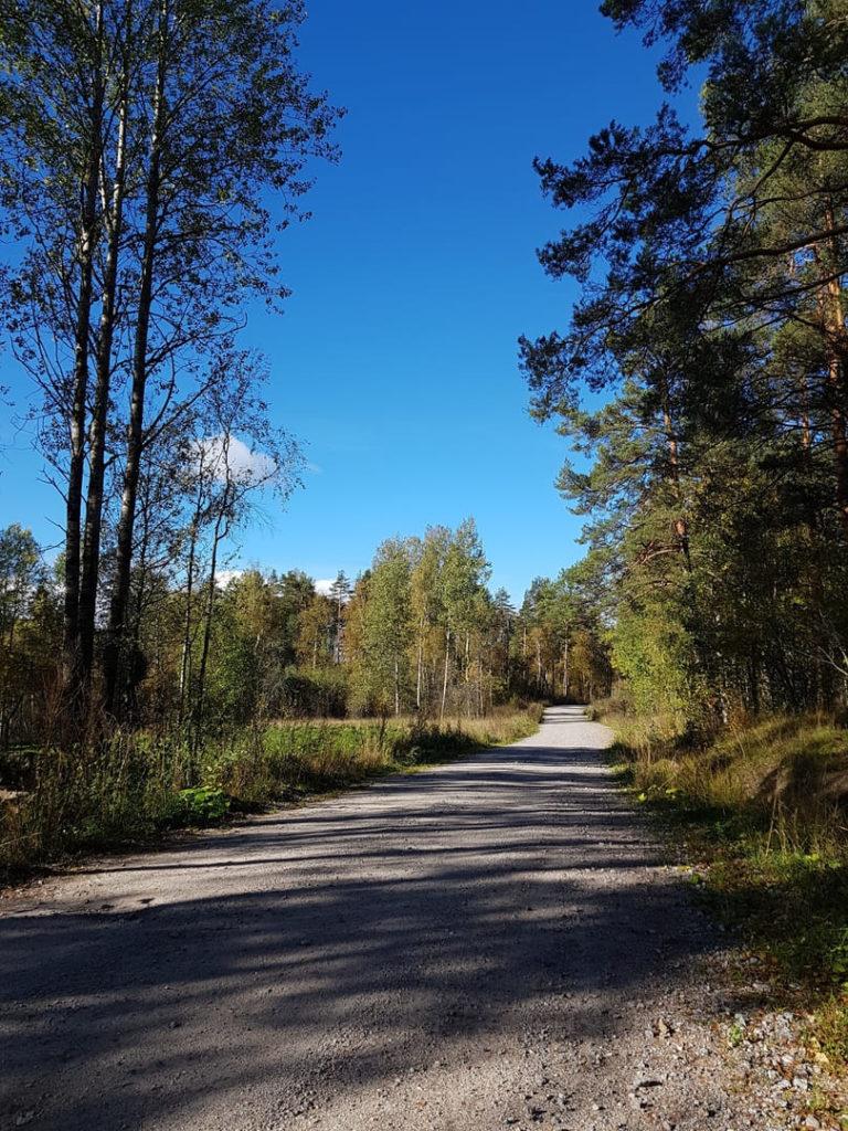 Дорога на Ястребиное озеро