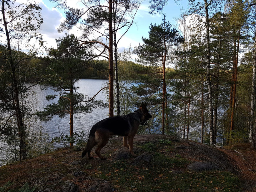Собаки на Ястребином озере