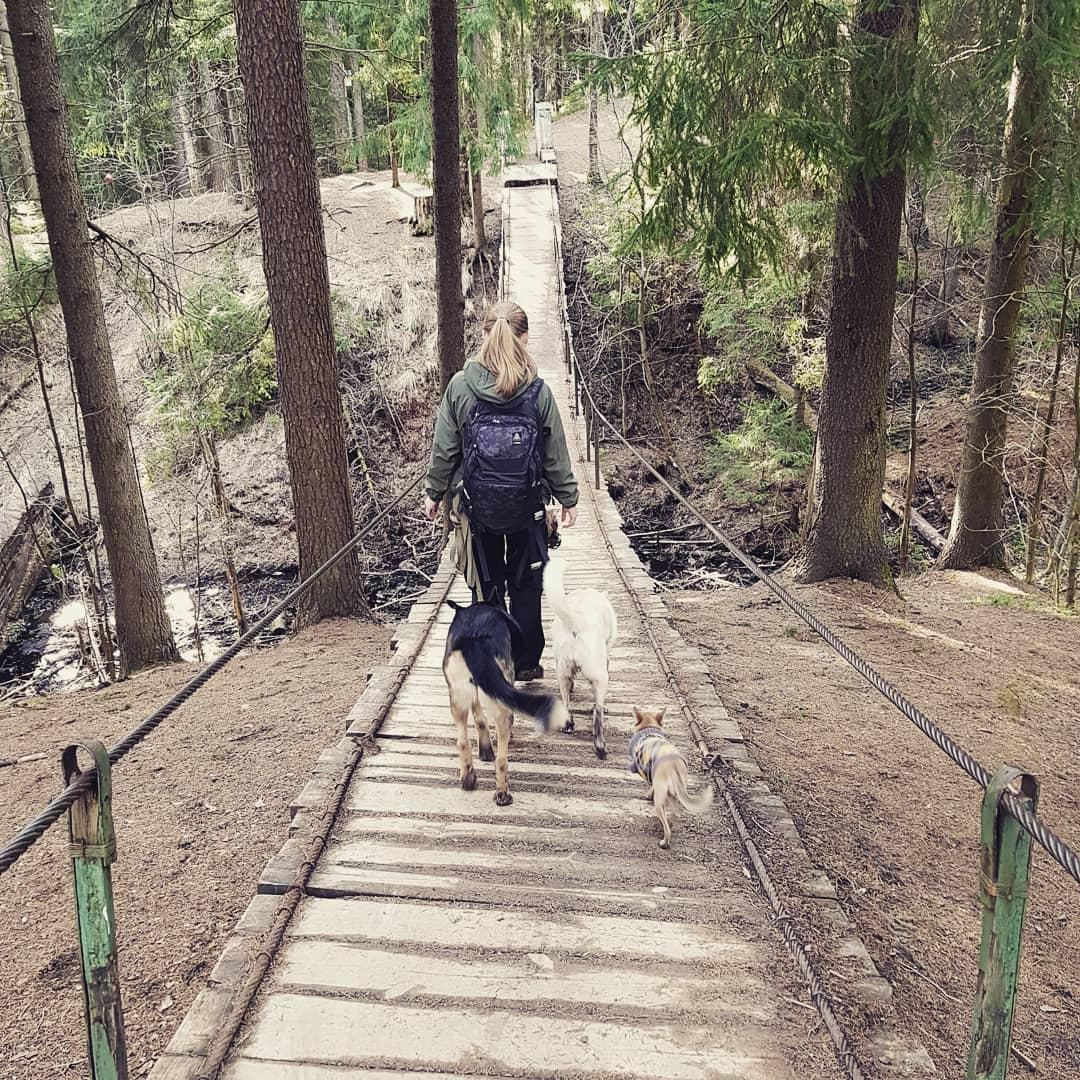 Ново-Кавголовский лесопарк на 41К-66,  Ленинградская обл. (Парки)