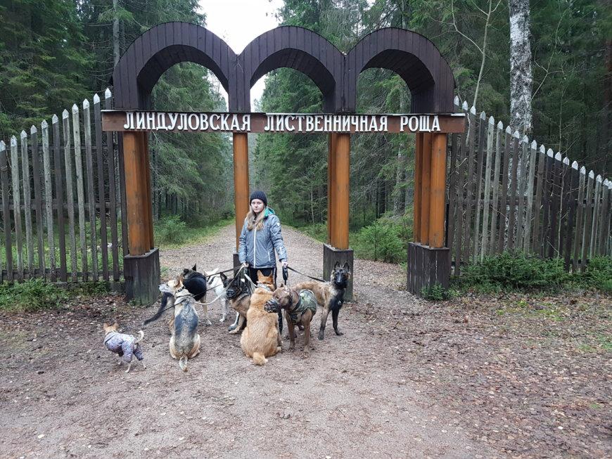 Линдуловская роща на Линдуловская дор., Ленинградская обл. (Парки)