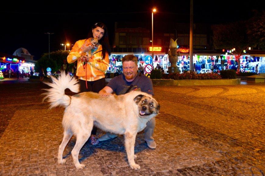 Путешествие с собакой на море в Турцию. Заметки чихуахуа Малины.