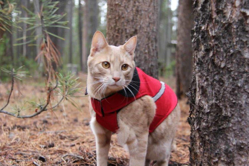 Кошка в тёплом одежде, свитере.