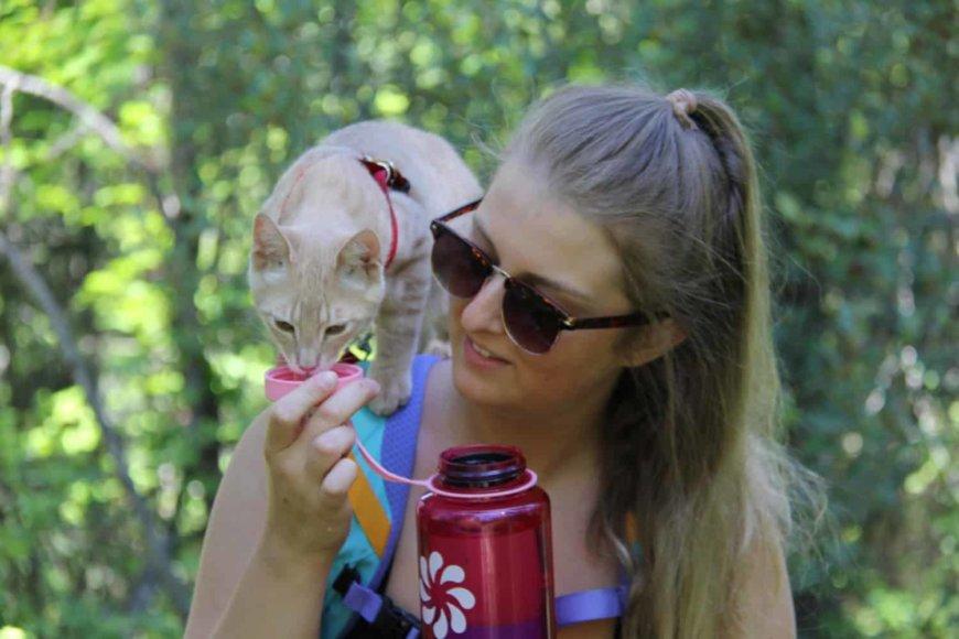 Питье для кошек в дороге, в путешествии, в поездке