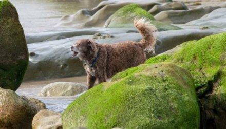 Защитите своих собак от токсичных сине-зеленых водорослей