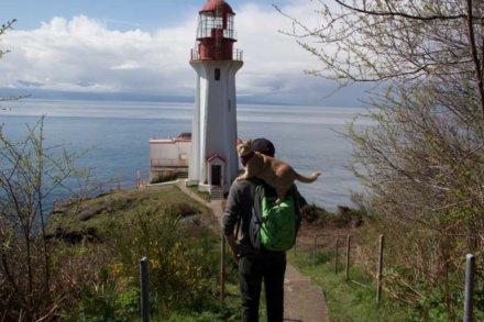 Что вы должны взять с собой для путешествия с кошкой?
