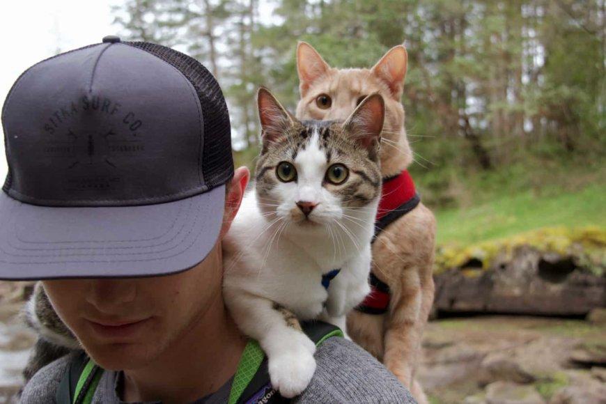 С кошкой в поездку и путешествие