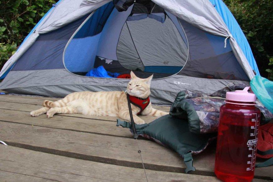 Кошка в походе, на природе, в палатке