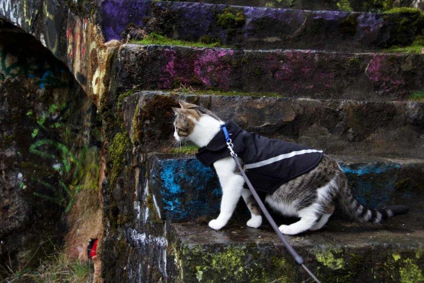 Кошка в тёплой одежде, свитере