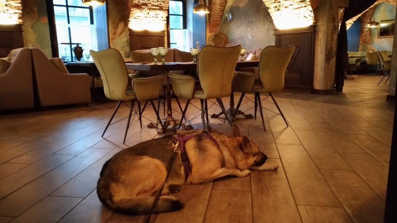 Голландская кухня в Кронштадте - в ресторан с собакой