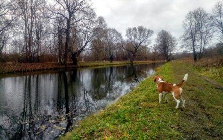 Луговой парк и каналы Петергофа