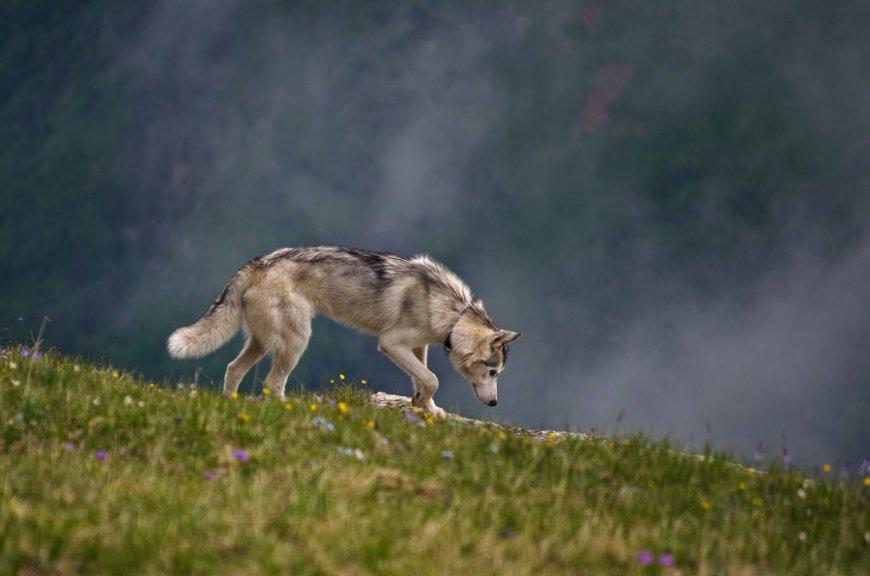 В горах с собакой
