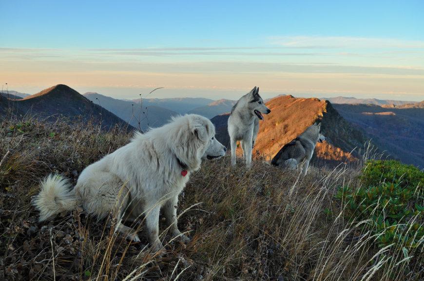С собаками в горах