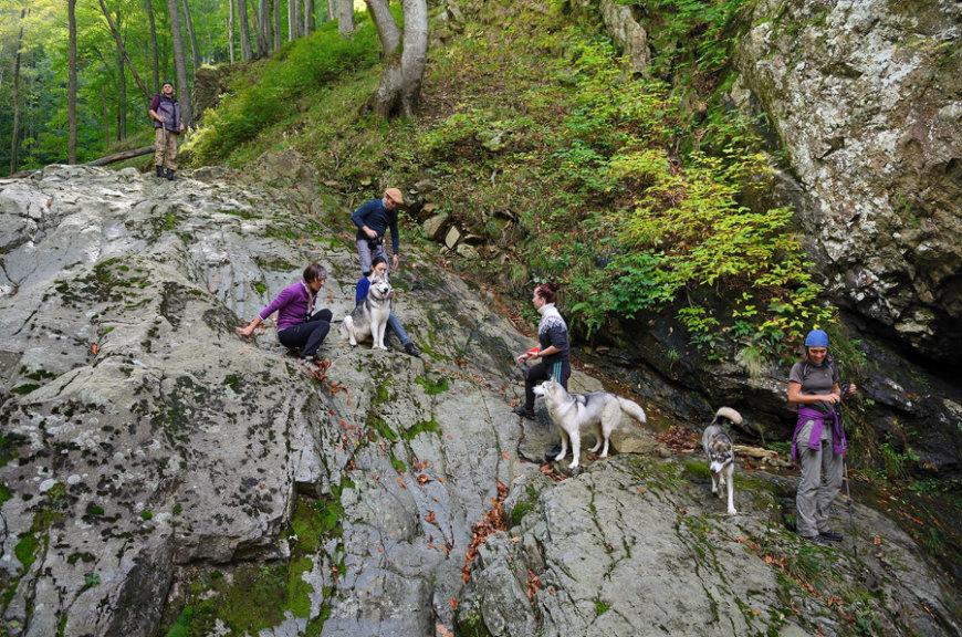 С собаками в походе