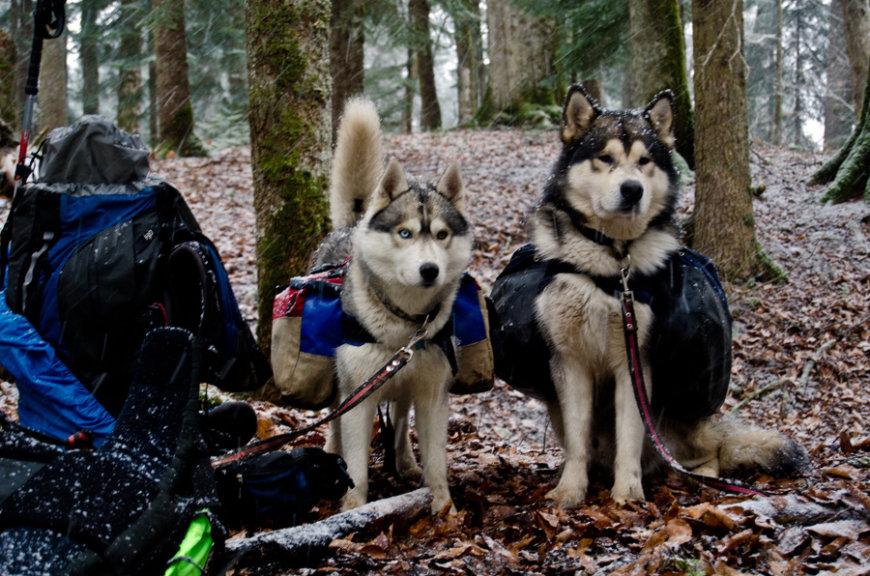 С собаками в походе в горы