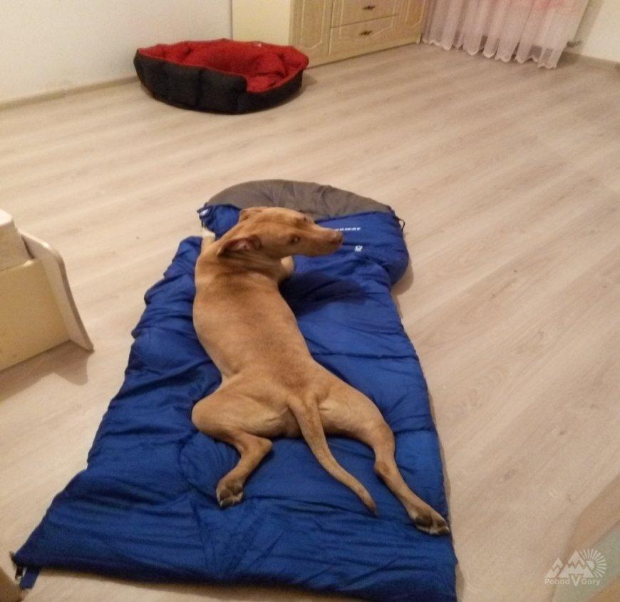 В Карпаты с собакой - отчет о походе по Черногоре