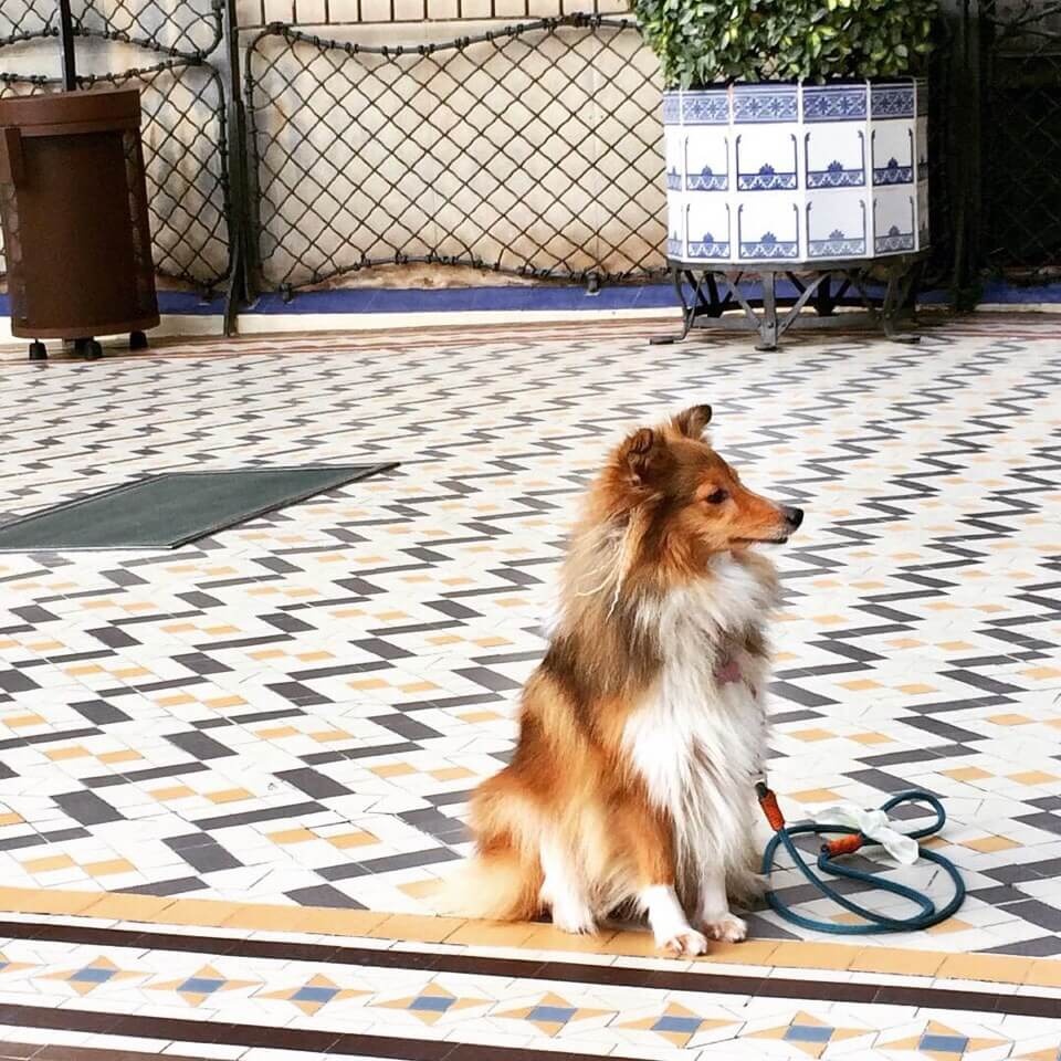 Casa Batlló на Passeig de Gràcia,  43 (Музеи, экскурсии, зоопарки)