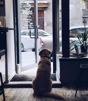 """Кафе """"Coffee Boutique"""""""