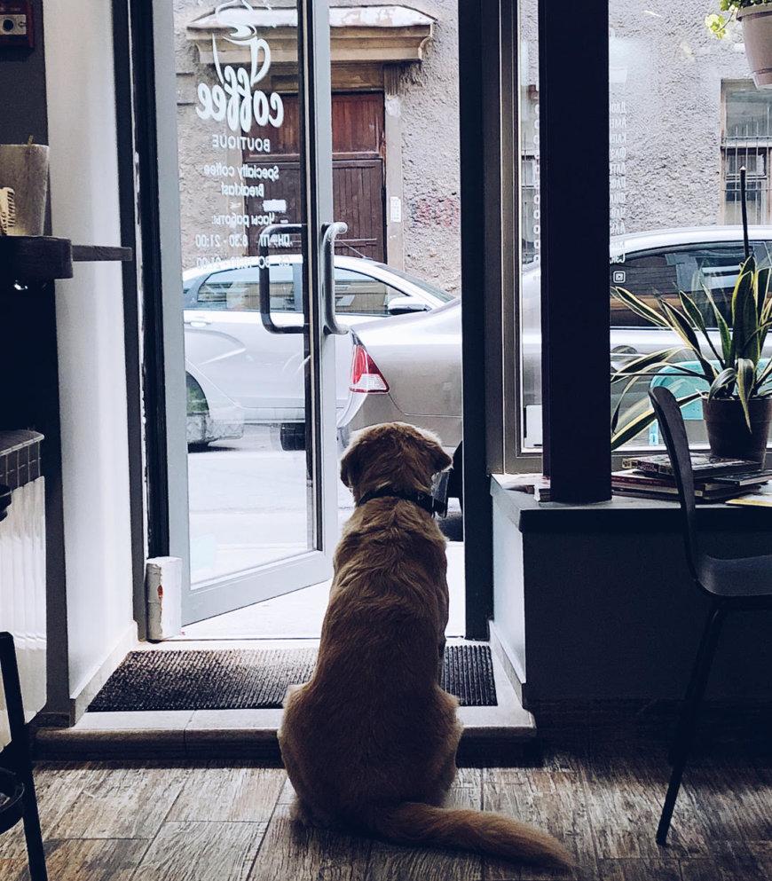 Coffee Boutique на Ропшинская ул., 3 (Кафе)