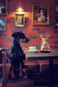 "Кафе ""Pinscher Coffee"""
