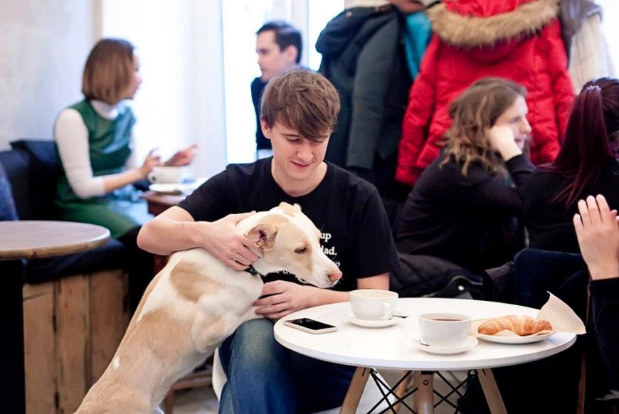 David B. Cafe на Большой Палашевский пер., 8 (Кафе)