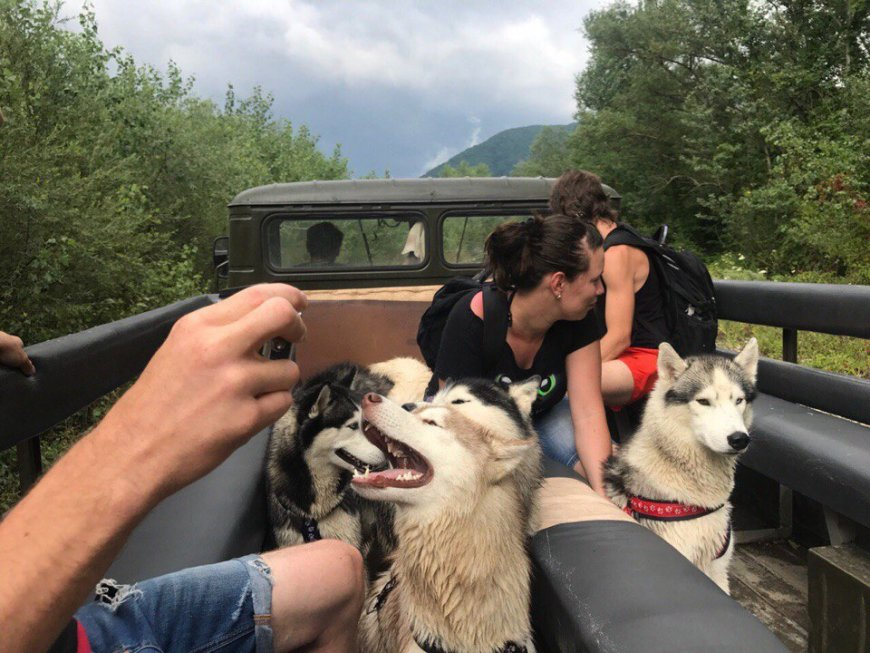 С собаками Хаски по горам на машине