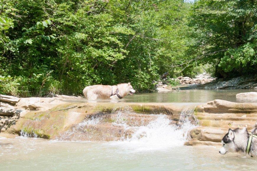 Собаки Хаски у горной реки