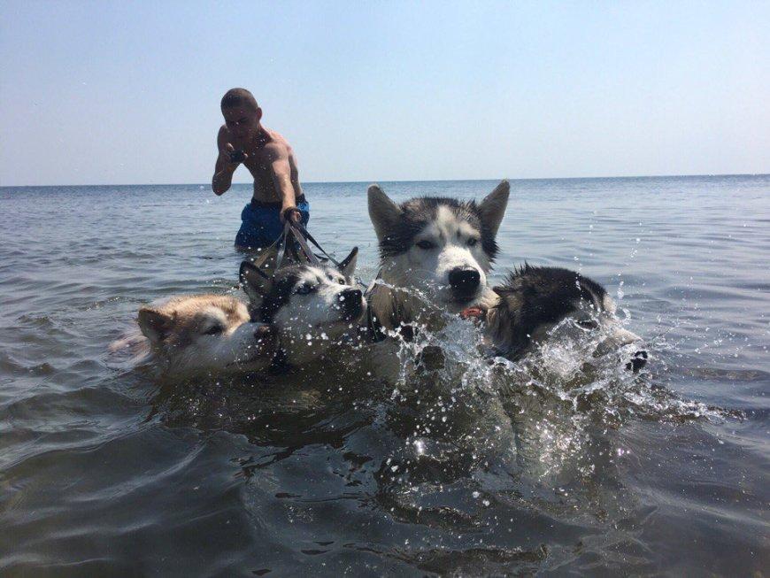 Собаки Хаски на море