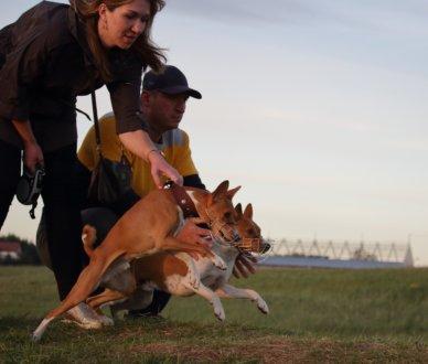 LureClub — бега за механическим зайцем (курсинг) на  (Специально для собак)