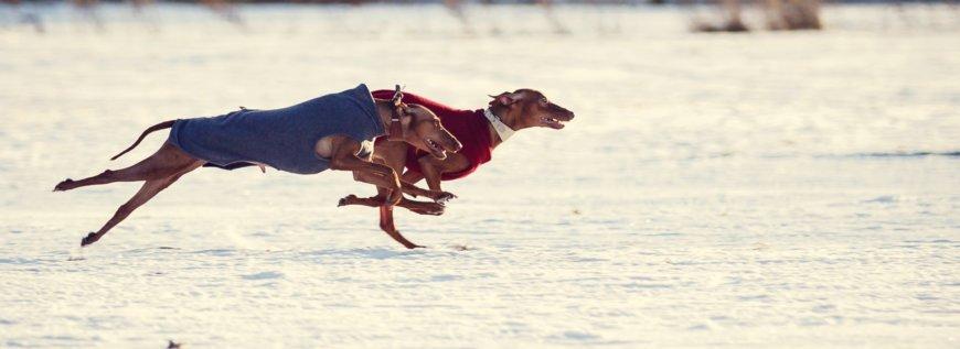 ПБК — бег за механическим зайцем (курсинг) на Парашютная ул., 74 (Специально для собак)