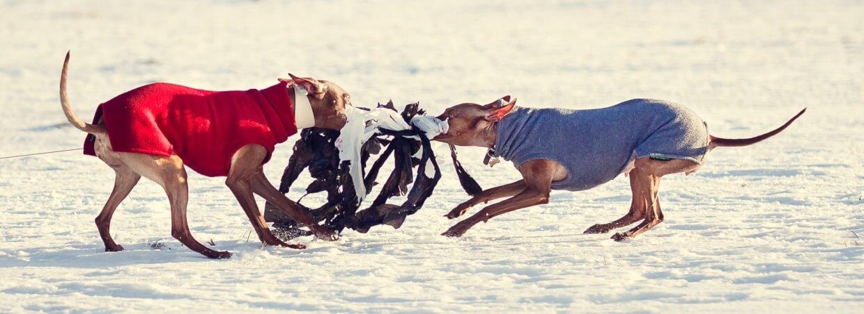 ПБК — бег за механическим зайцем (курсинг) на Парк Интернационалистов,  Южное ш. (Специально для собак)