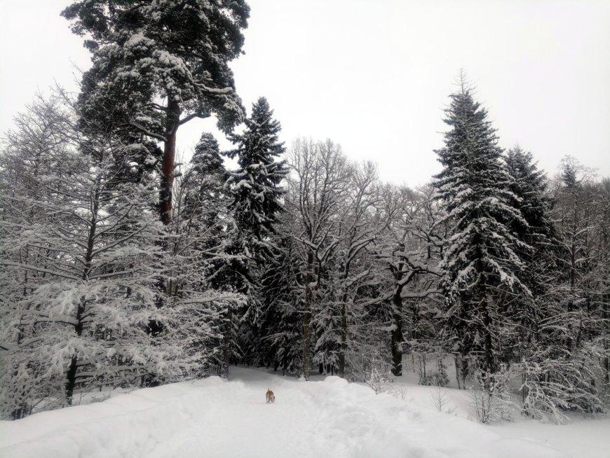 парк Усадьбы Мордвиновых на Новогорская ул., 62 (Парки)