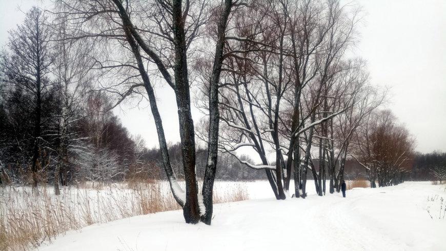 Английский парк на Петергофская ул., Петергоф (Парки)