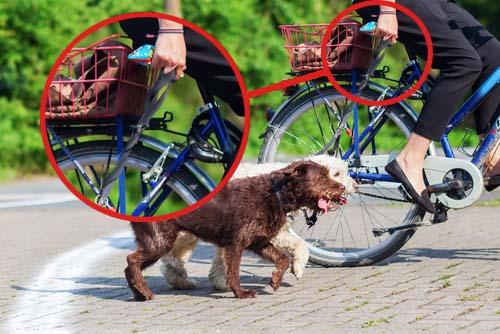 Как сделать езду на велосипеде с собакой безопасной